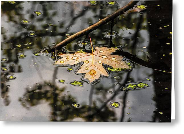 Trees Reflecting In Water Greeting Cards - Water Droplets on a leaf Greeting Card by Tracy Winter