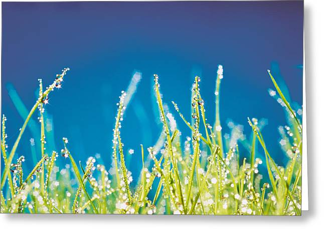 Close Focus Nature Scene Greeting Cards - Water Droplets On Blades Of Grass Greeting Card by Panoramic Images