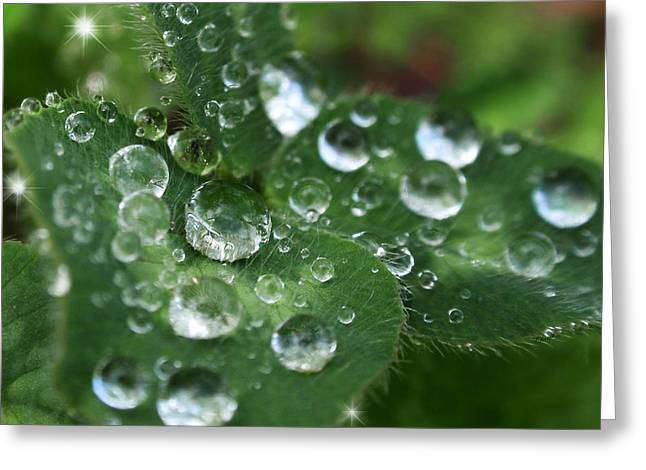 Christina Digital Art Greeting Cards - Water Drops On Green Clover Greeting Card by Christina Rollo