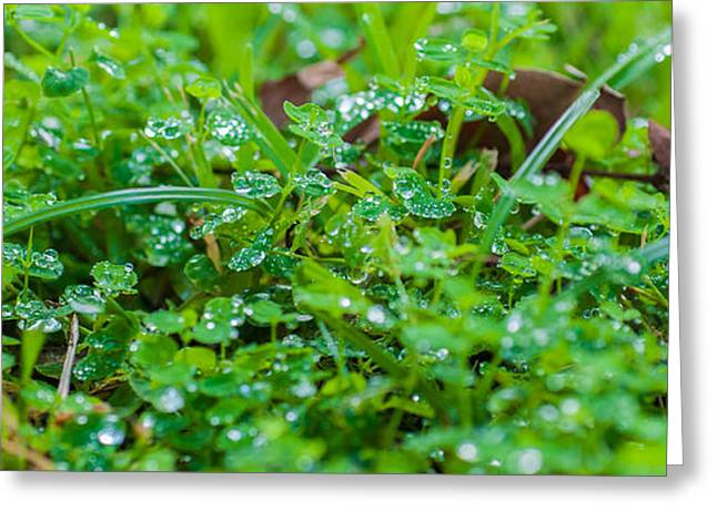 Abstract Rain Greeting Cards - Water Drops On The  Grass 0048 Greeting Card by Terrence Downing