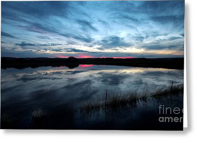 Michele Greeting Cards - Water Field Harney County Oregon Greeting Card by Michele AnneLouise Machholz
