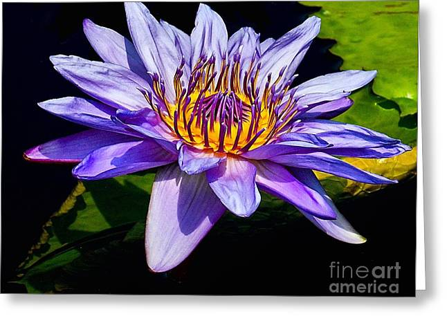 Aquatic Greeting Cards - Water Flower Greeting Card by Nick Zelinsky