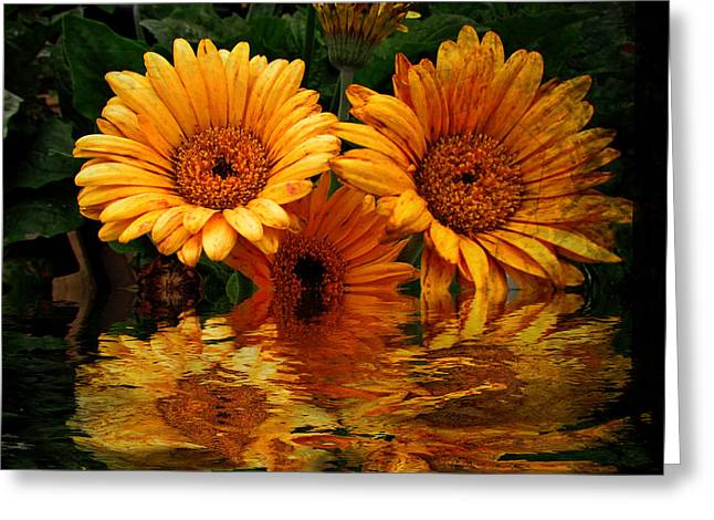 Shannon Story Greeting Cards - Water Flower Greeting Card by Shannon Story