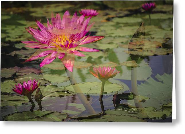 Penny Lisowski Greeting Cards - Water Garden Dream Greeting Card by Penny Lisowski