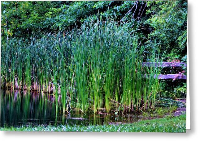 Water Garden Greeting Cards - Water Garden Plants Greeting Card by Dan Sproul