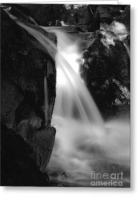 Forestry Commission Greeting Cards - Water Greeting Card by James Taylor