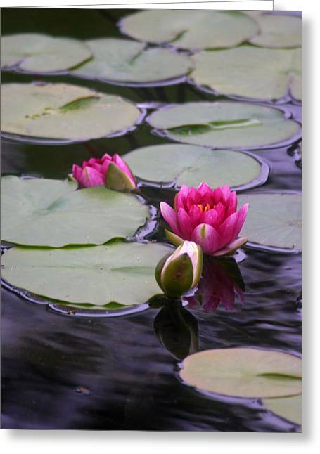 Lili Greeting Cards - Water Lili Greeting Card by Ronald Hunt