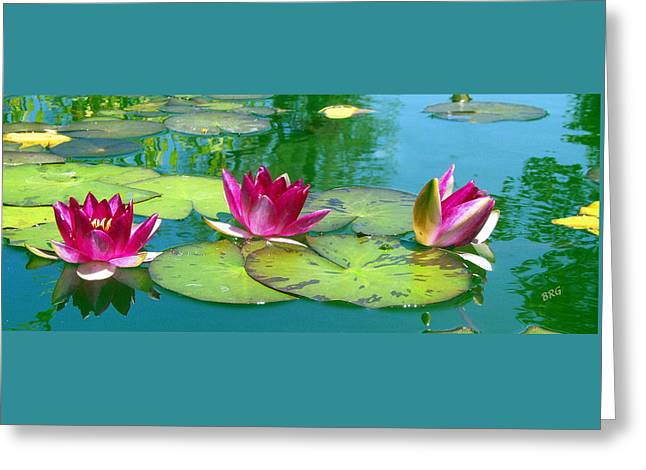 Water Garden Greeting Cards - Water Lilies Greeting Card by Ben and Raisa Gertsberg