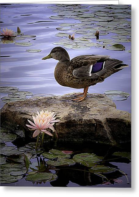 Aha Greeting Cards - Water Lilies Feathers and Beak Greeting Card by Julie Palencia