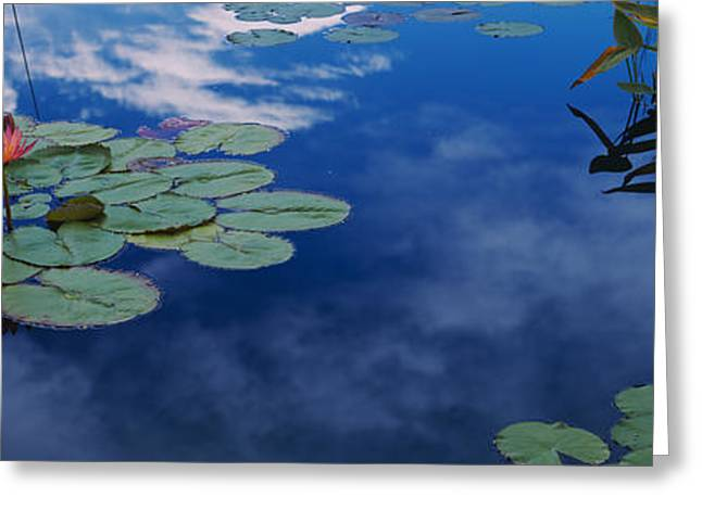 Cloud Reflections In Water Greeting Cards - Water Lilies In A Pond, Denver Botanic Greeting Card by Panoramic Images