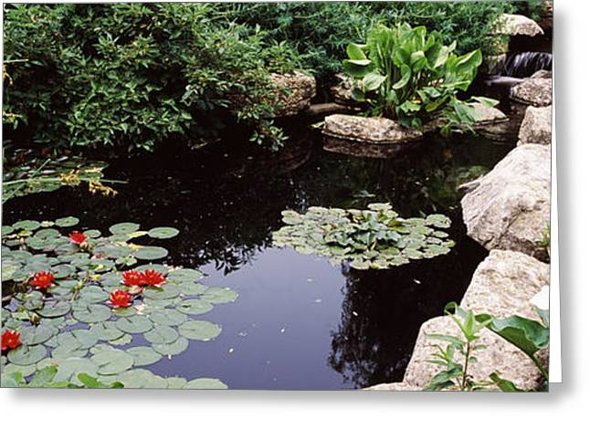 Botanical Greeting Cards - Water Lilies In A Pond, Sunken Garden Greeting Card by Panoramic Images