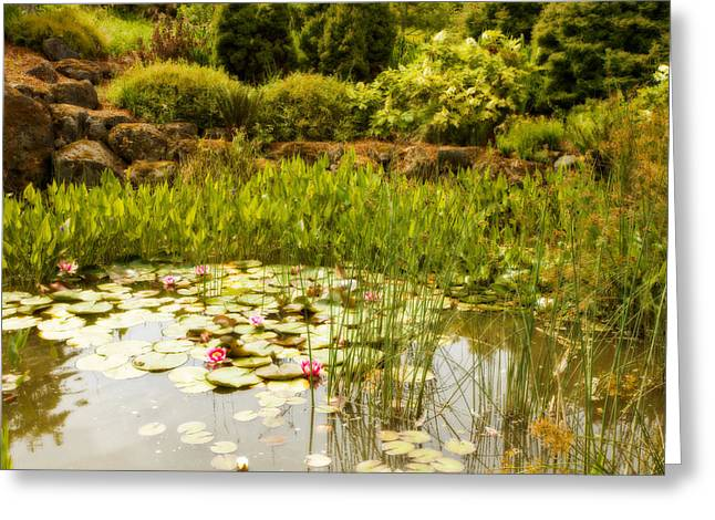 Water Garden Greeting Cards - Water Lilies in the Garden Greeting Card by Bonnie Bruno