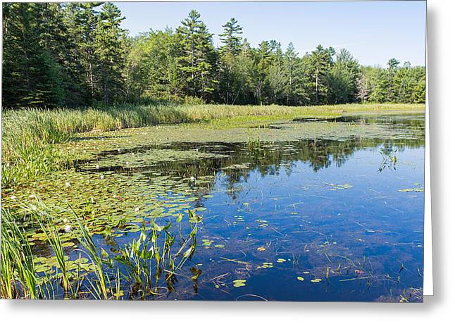 Water Lilies Greeting Card by John M Bailey