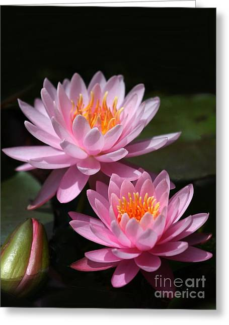 Water Garden Photographs Greeting Cards - Water Lilies Love the Sun Greeting Card by Sabrina L Ryan