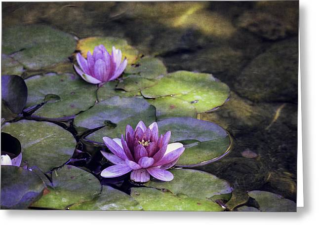 Water Lilly Digital Greeting Cards - Water Lilies Greeting Card by Maria Angelica Maira