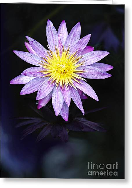Florida Flowers Pyrography Greeting Cards - Water Lilies V Greeting Card by Eyzen M Kim