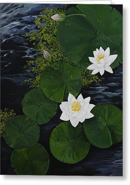 Water Garden Greeting Cards - Water Lilies Greeting Card by Virginia McLaren