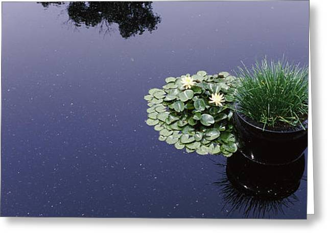 Botanical Greeting Cards - Water Lilies With A Potted Plant Greeting Card by Panoramic Images