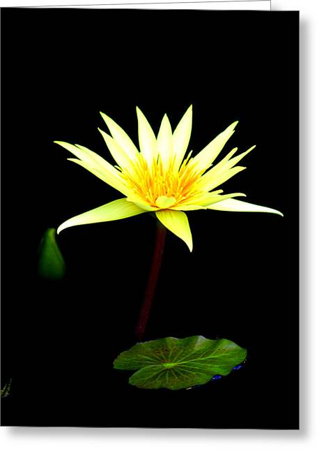 Recently Sold -  - Water Lilly Greeting Cards - Water Lilly Greeting Card by Doug Hoover