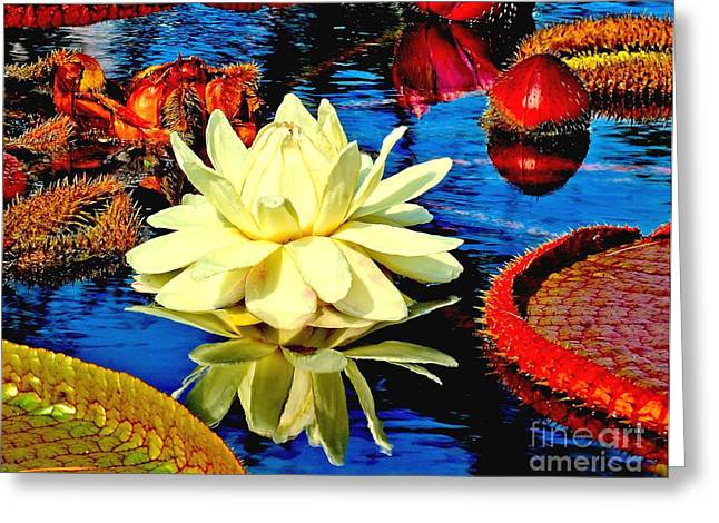 Water Lilly Pond Greeting Card by Nick Zelinsky