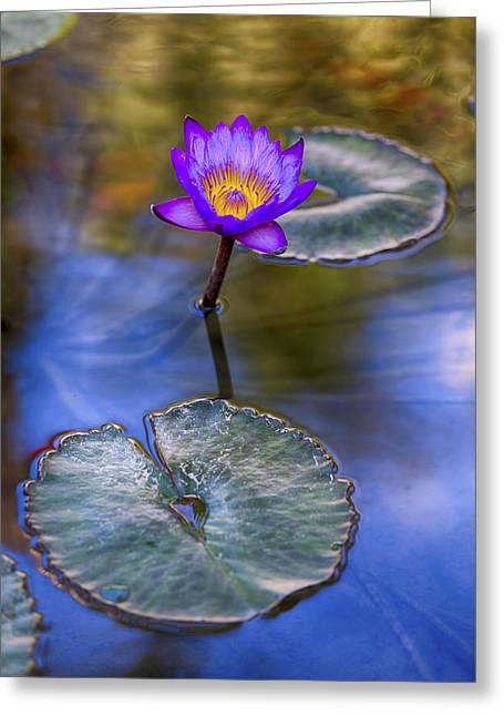 Depth Of Field Greeting Cards - Water Lily 4 Greeting Card by Scott Campbell