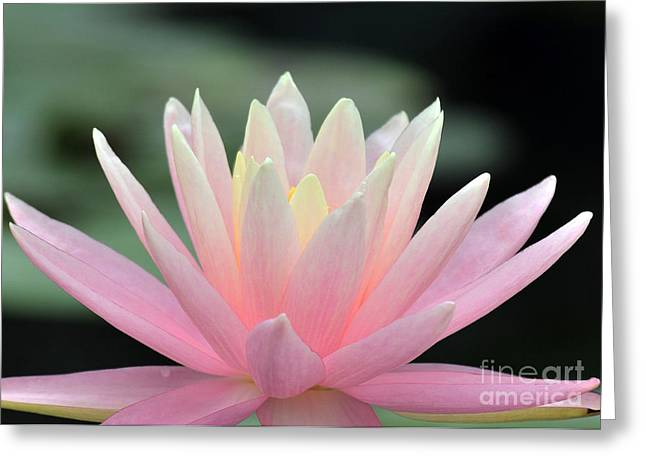 Best Sellers -  - Water Lilly Greeting Cards - Water Lily 42 Greeting Card by Terri Winkler