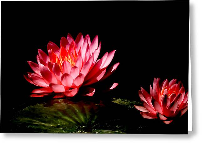 Aquatic Greeting Cards - Water Lily 5 Greeting Card by Julie Palencia