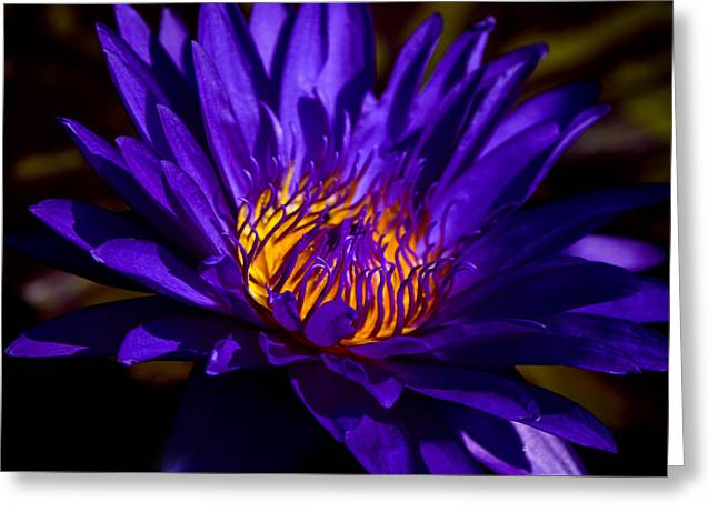 Nature Center Pond Photographs Greeting Cards - Water Lily 7 Greeting Card by Julie Palencia