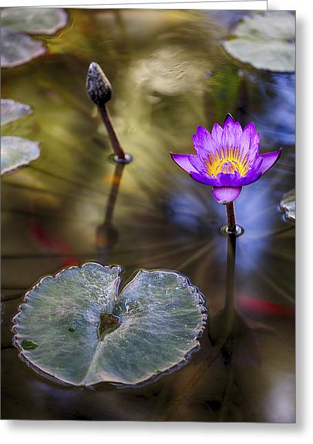 Impressionistic Greeting Cards - Water Lily 7 Greeting Card by Scott Campbell