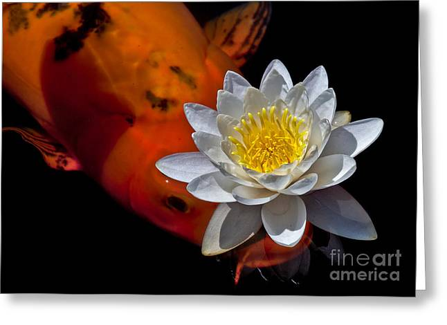 Individualism Greeting Cards - Water Lily and Koi Greeting Card by Kim Michaels