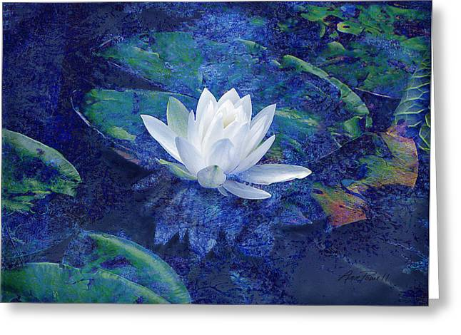 Floral Photographs Greeting Cards - Water Lily Greeting Card by Ann Powell