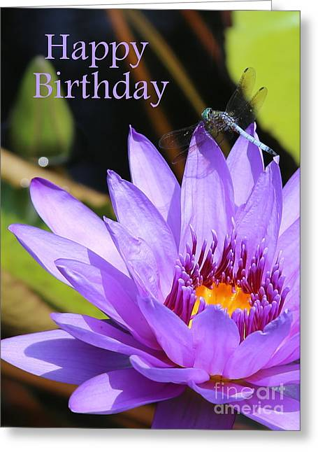Water Lilies And Insects Greeting Cards - Water Lily Birthday Card Greeting Card by Carol Groenen