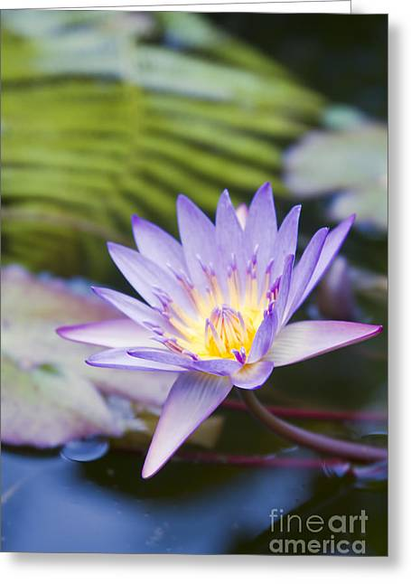 Painted Islands Of Summer Lilies Greeting Cards - Water Lily Blue Jade Greeting Card by Sharon Mau