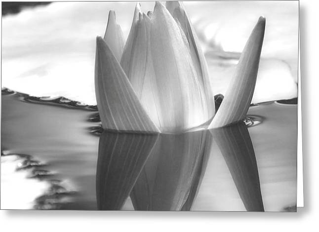 Wets Palm Beach Greeting Cards - Water Lily Bud Reflected #1 Greeting Card by Sabrina L Ryan