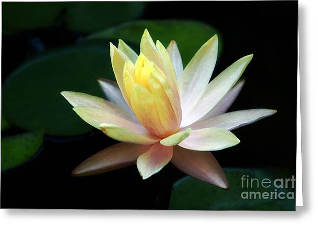 Water Garden Greeting Cards - Water Lily Greeting Card by Charline Xia
