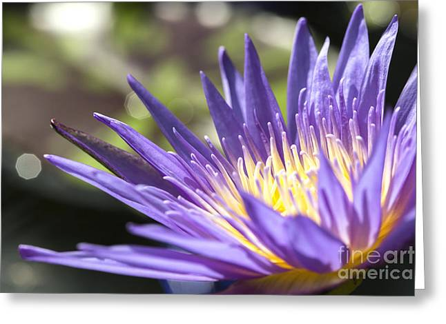 Macro Photography Pyrography Greeting Cards - Water Lily close up Greeting Card by Eyzen M Kim