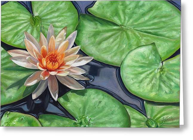 Water Lily Pond Greeting Cards - Water Lily Greeting Card by David Stribbling