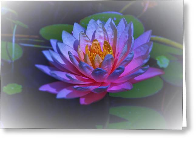 Water Lily Greeting Card by Debra Madonna