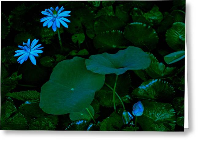 Donald Chen Greeting Cards - Water Lily Greeting Card by Donald Chen