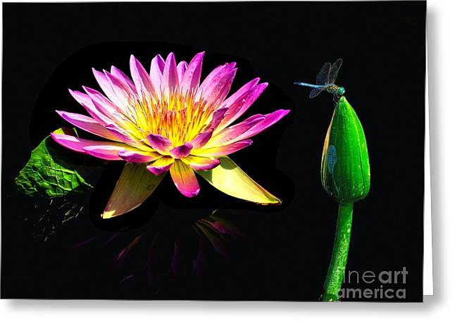 Water Lily Dragon Fly Greeting Card by Nick Zelinsky