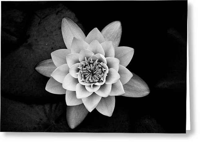 White Waterlily Greeting Cards - Water Lily Greeting Card by Hakon Soreide