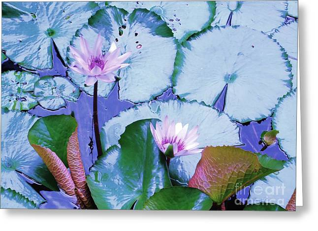 Greek Insects Greeting Cards - Water Lily II Greeting Card by Ann Johndro-Collins