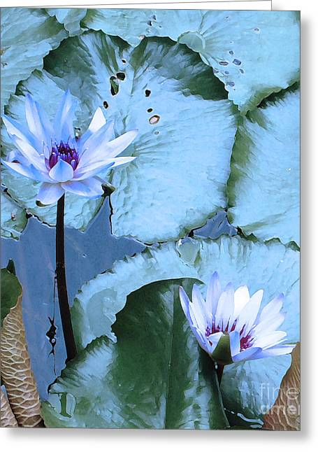 March Greeting Cards - Peaceful Water Lily Greeting Card by Ann Johndro-Collins