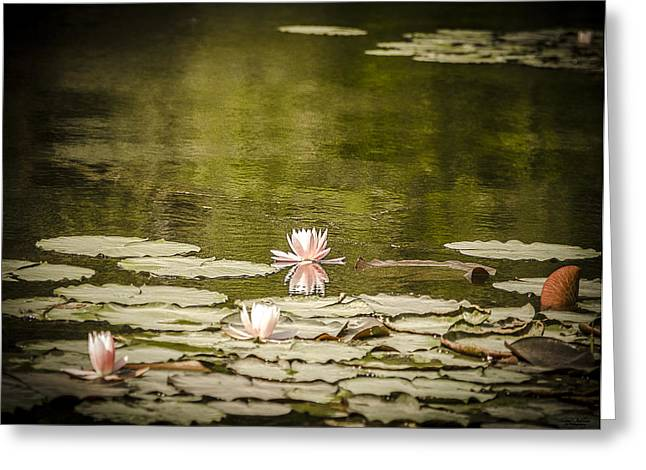 Reflecting Water Pyrography Greeting Cards - Water Lily in Bloom Greeting Card by Shirley Tinkham