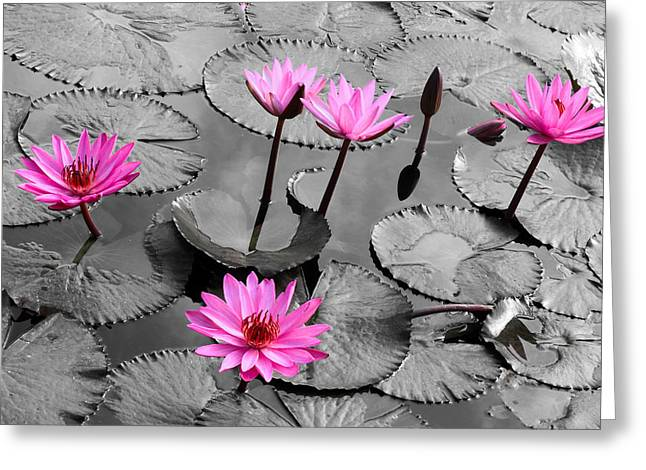 Water Garden Pyrography Greeting Cards - Water lily lotus flower and leaves Greeting Card by Thanapol Kuptanisakorn