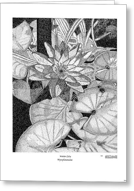 Deployment Prints Greeting Cards - Water Lily Nymphaeacea Greeting Card by Arthur Eggers