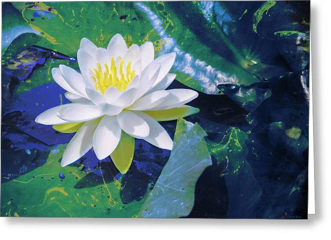 Nymphaea Alba Greeting Cards - Water Lily on Sandusky Bay - Color Splash Greeting Card by Shawna  Rowe
