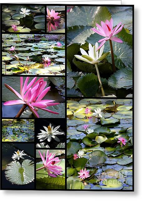 Water Garden Greeting Cards - Water Lily Pond Collage Greeting Card by Carol Groenen