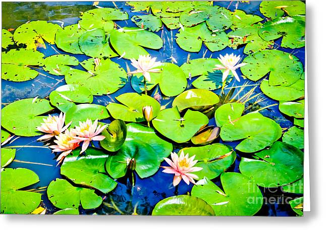 Beautiful Lotus Greeting Cards - Water Lily Pond Greeting Card by Colleen Kammerer