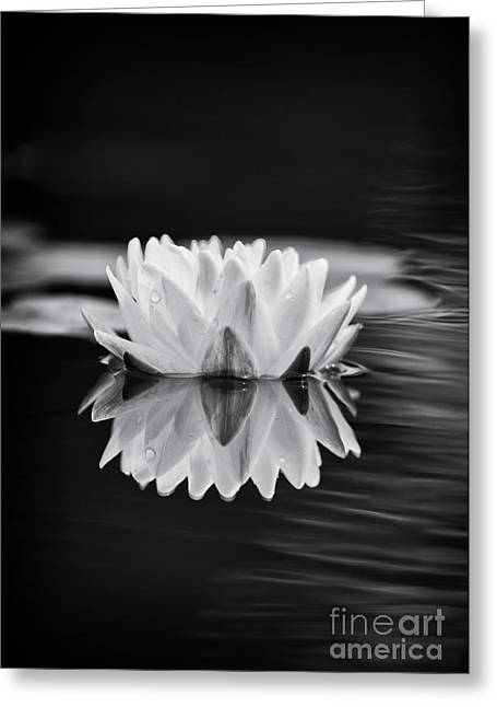 Nymphaea Greeting Cards - Water Lily Reflection Greeting Card by Tim Gainey